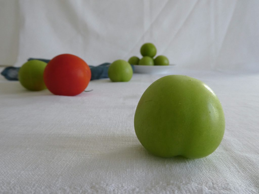 grønne tomater illu